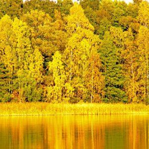 Herbst am Pälitzsee